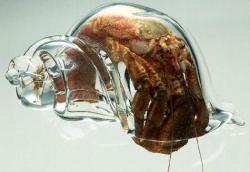 glass-shell_for_hermit_crab.jpg